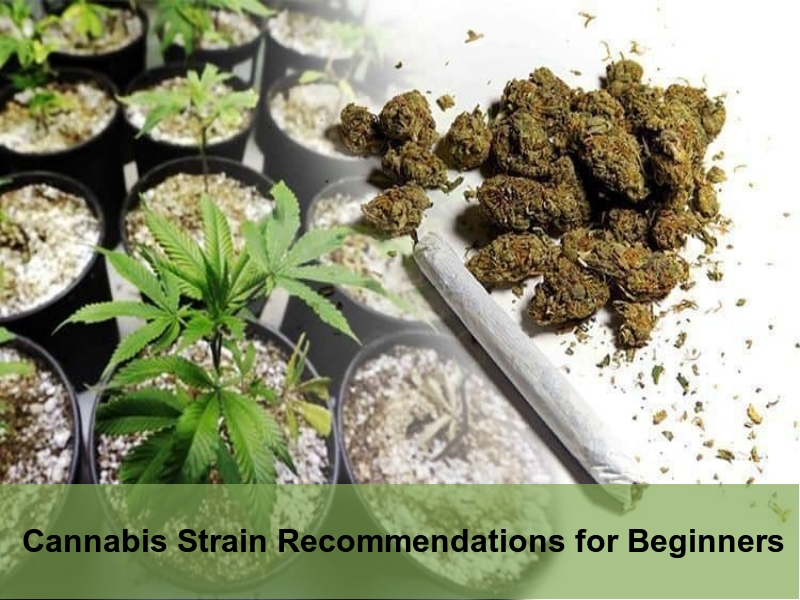 Strain Recommendations